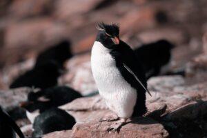 pingvin figur